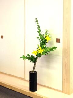 20150521 土居 雷電・すかし百合.jpg